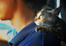 Kitty. Thai kitty in human shoulder Stock Photography