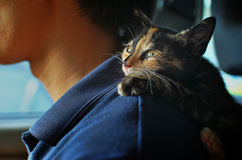 Kitty. Thai kitty in human shoulder Royalty Free Stock Images