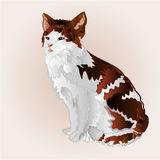 Kitty three color vector Stock Image