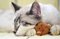 Kitty with toy Stock Photography