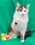 Kitty and toy Stock Photos