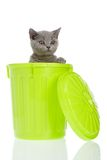 Kitty in a trashcan. Grey cat in a green dustbin isolated on a white background Stock Photo