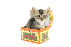 Kitty in treasure box Stock Photography