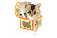 Kitty in treasure box Stock Photos