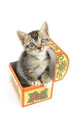 Kitty in treasure box Stock Images