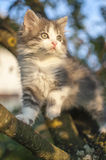 Kitty on tree Stock Image
