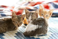 Kitty triple Stock Photos