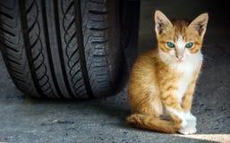 kitty under the car Royalty Free Stock Photos