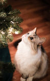 Kitty under the Christmas tree Stock Image