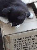 kitty foto de stock royalty free