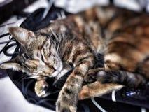 kitty image stock