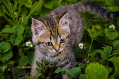 Kitty on walk Stock Photos