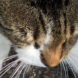 Kitty Whiskers lizenzfreie stockbilder