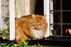 Kitty On A Windowsill Royalty Free Stock Image