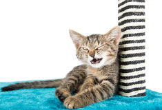 Kitty winks lies on the blue soft surface Royalty Free Stock Photo