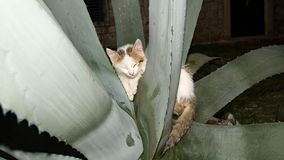 Kitty wrapped around a cactus plant Royalty Free Stock Photography