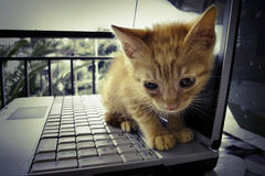 Kitty y ordenador portátil Imagen de archivo