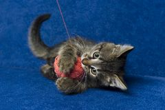 Kitty with yarn ball Royalty Free Stock Image