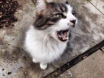 Kitty Yawn Stock Photos