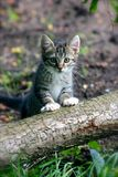Kitty Royalty Free Stock Photography