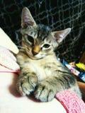 Kitty& x27; zo slaperig s royalty-vrije stock fotografie