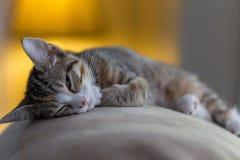 KittyKat Arkivbild