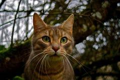 Kittylicious Fotografia Stock
