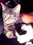 Kittylove lizenzfreies stockbild