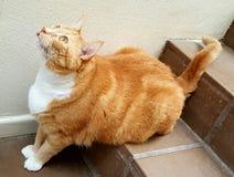 Kiwa kot przygotowywający skakać Zdjęcia Stock