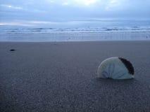 Kiwanda Oregon z Seashell i piaskiem zdjęcia royalty free