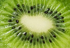 Kiwi Photo libre de droits