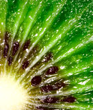 Kiwi. Stock Photography