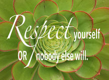 Kiwi Aeonium, una pianta succulente verde e rossa con la citazione fotografia stock libera da diritti