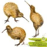 Kiwi akwareli ptasia ręka rysująca ilustracja Zdjęcia Stock