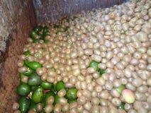Kiwi and avocado in trash Royalty Free Stock Photo