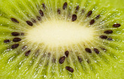 Kiwi background Royalty Free Stock Photo