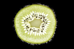Kiwi with backlight Stock Images