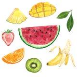 Kiwi, banaan, ananas, watermeloen, sinaasappel, mango, aardbei en een groen blad, waterverfillustratie stock illustratie