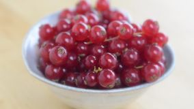 Kiwi berries stock video