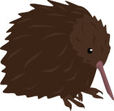 Kiwi Bird Royalty Free Stock Photography