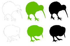 Kiwi Bird Adult & Baby Vector Illustration stock photos
