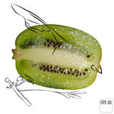 A kiwi bird drawn on the basis of kiwi fruit. One kiwi bird with royalty free illustration