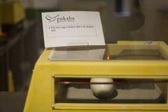 Kiwi bird egg in the nursery stock photos