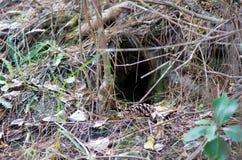 Kiwi bird habitat. In the bush of New Zealand stock images