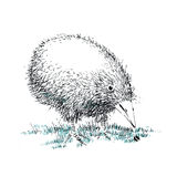 Kiwi bird Royalty Free Stock Photos