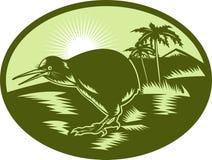 Kiwi bird side view Royalty Free Stock Photo
