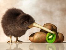 Kiwi Bird, Kiwifruit vector illustration