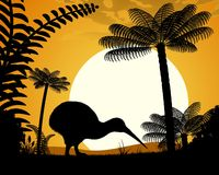 Kiwi bird at sunset. Royalty Free Stock Images