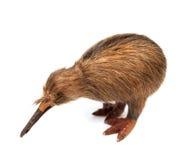 Kiwi bird toy. Isolated on the white background royalty free stock image