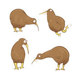Kiwi birds set. Cute cartoon kiwi birds set. Vector image. Australian birds vector illustration